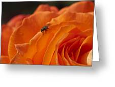 Orange With Visitor Greeting Card