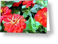 Orange Zinnias Greeting Card