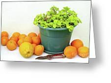 Oranges And Vase Greeting Card