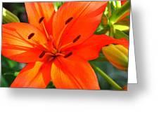 Oranges Poranges Greeting Card