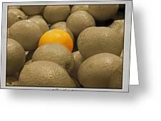 Oranges S.c.  Greeting Card