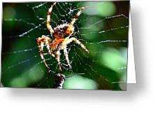 Orb Weaver And Lunch Greeting Card