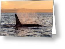 Orca At Sunset Greeting Card