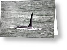 Orca On The Move Greeting Card