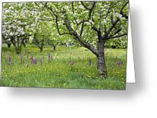 Orchard With Flowering Orchids Greeting Card