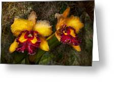 Orchid - Cattleya - Dripping With Passion  Greeting Card