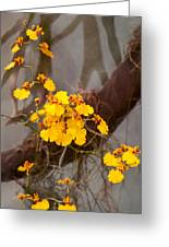 Orchid - Golden Morning  Greeting Card