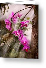 Orchid - Tropical Passion Greeting Card