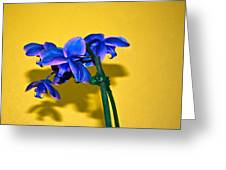Orchid #1 Greeting Card by David Alexander