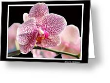Orchid 10 Greeting Card