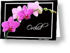 Orchid 2 2 Greeting Card