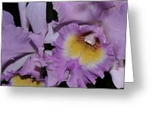 Orchid 234 Greeting Card