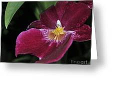 Orchid 252 Greeting Card