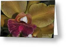 Orchid 85 Greeting Card