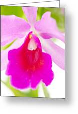 Orchid Abstract #0042 Greeting Card