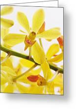 Orchid Greeting Card by Atiketta Sangasaeng