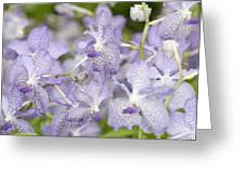 Orchid Blooms Greeting Card