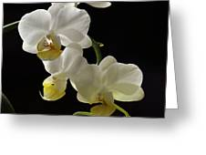 Orchid Blossom Cluster Greeting Card