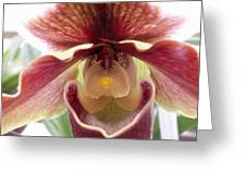 Orchid Interior Greeting Card