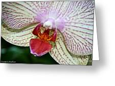 Orchid Close Up Greeting Card