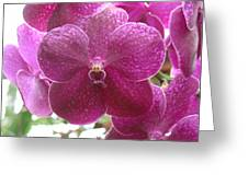 Orchid Cluster Greeting Card