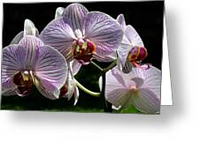 Orchid Flower Blooms Greeting Card