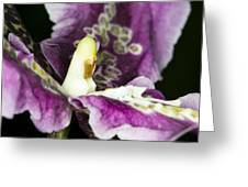 Orchid Flower Blossom Greeting Card