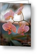 Orchid Gathering Greeting Card