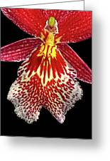 Orchid Hybrid Greeting Card