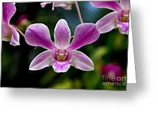 Orchid In Kandy Greeting Card