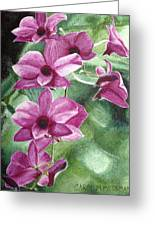 Orchid In The Shadows Greeting Card