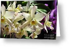 Orchid Iwanagara 9854 Greeting Card