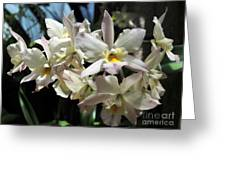 Orchid Iwanagara 9894 Greeting Card