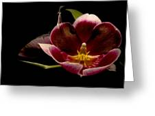 Orchid Greeting Card by Jacqui Collett