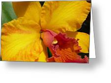 Orchid No. 21 Greeting Card by Gregory Young
