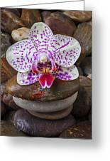 Orchid On Stack Of Rocks Greeting Card