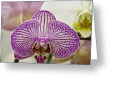 Orchid Originality Greeting Card