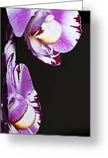 Orchid Stem Greeting Card