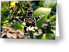 Orchid Study Greeting Card