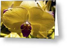Orchid Study Vi Greeting Card