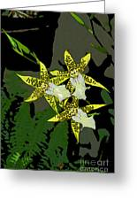 Orchid Trilogy Greeting Card