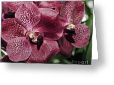 Orchid Vanda And Ascocenda Hybrid II Greeting Card