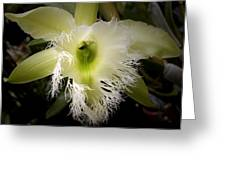 Orchid With Feathery Ends Greeting Card