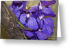 Orchids 06 Greeting Card