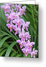 Orchids 15 Greeting Card