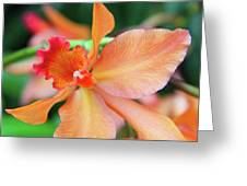Orchids 25 Greeting Card by Becky Lodes