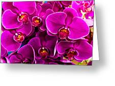 Orchids A Plenty Greeting Card