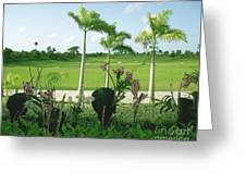 Orchids At Iberostar Golf Course In Punta Cana Dr Greeting Card