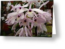Orchids Beauty Greeting Card
