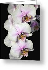 Orchids Greeting Card by David Chapman
